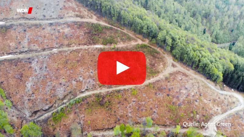 Teile der rumänischen Karpaten etwa zählen zu den letzten Urwäldern Europas, nahezu unberührt von Menschen. Doch obwohl der Nationalpark offiziell geschützt ist, wird immer wieder illegal abgeholzt. Der Umweltorganisation WWF schätzt, dass 30 Prozent des gesamten Holzeinschlags illegal passiert. Das Holz geht in die Pelletproduktion und in rumänische Spanplattenfabriken für Billigmöbel.