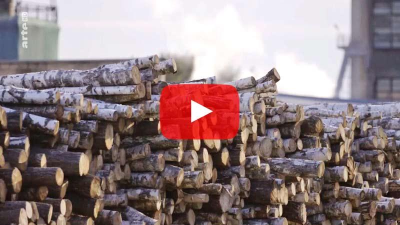 In Polen werden seit zwei Jahren Bäume in Europas letztem Urwald gefällt. Der Generalanwalt am EuGH sieht darin einen Verstoß gegen europäisches Naturschutzrecht.