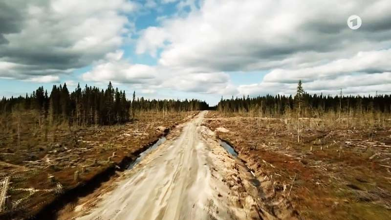 Die nördlichen (borealen) Wälder wachsen in kalten Regionen, in denen der eisige Winter länger als sechs Monate dauert. Sie umfassen weite Gebiete in Europa, Asien und Nordamerika zwischen dem 50. und 70. Breitengrad. Die borealen Wälder Europas und Asiens werden auch Taiga genannt. Mehr als ein Drittel des weltweiten Waldbestands sind boreale Wälder, und auf der Nordhalbkugel sind sie sogar die vorherrschende Waldform. Sie bilden die größten zusammen hängenden Waldgebiete der Erde.